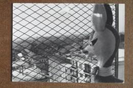 ROVIGO  CASA DI LICINIO--1961---- BELLISSIMA - Italia