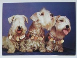 Dog  Chien  Hund  / Sealyham Terriers - Cani