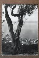 TORRI DEL BENAGO -1950 -  BELLA - Italia