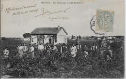 CPA GARD VERGEZE Circulé Vendanges Bourry Métier - Vergèze