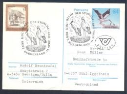 Austria Österreich 1989 Postal Stationery Card: Birds Vogel Oiseaux; Natur Nature Protection Stork Storche - Environment & Climate Protection