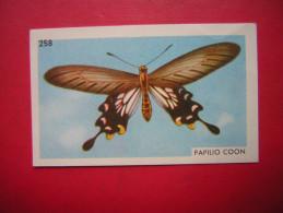 PETITE IMAGE ENTREMETS FRANCORUSSE  N° 258  DE L´ALBUM N° 2   PAPILLON  PAPILIO COON - Old Paper