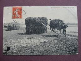 "CPA 29 CARANTEC ILE CALLOT Récolte Du Varech écrit "" Varrech "" ANIMEE METIERS MER AGRICULTURE 1910 - Andere Gemeenten"