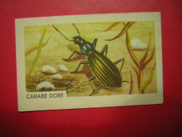 PETITE IMAGE ENTREMETS FRANCORUSSE  N° 120  INSECTE CARABE DORE - Old Paper