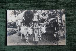 CEYLON - BULLOCK CART AND DRIVER - Sri Lanka (Ceilán)