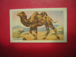 PETITE IMAGE ENTREMETS FRANCORUSSE  N° 40 CHAMEAU - Old Paper