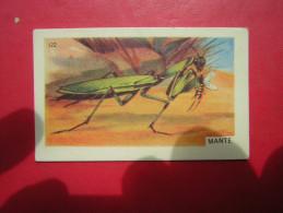 PETITE IMAGE ENTREMETS FRANCORUSSE  N° 122  MANTE RELIGIEUSE  INSECTE - Old Paper