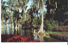 Cypress Trees Many Centuries Old Grow Far Out In The Waters Of Lake Eloise At Cypress Gardens, Florida - Arbres