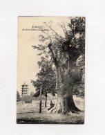 61942   Belgio,  Bruxelles,  Le  Gros Tilleul A Laeken,  VG  1910 - Monumenti, Edifici