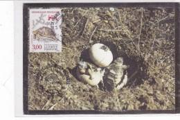 CARD TARTARUGA NASCITA TORTUE DI HERMANN PHOTO B. DEVAUX TIMBRE E OBLITERAZION PRIMO GIORNO GONFARONE FG-N-2-0882-25395 - Tortugas