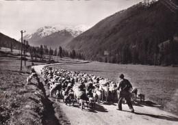 PAYSAGES ALPESTRES/CHANT PASTORAL (dil195) - France