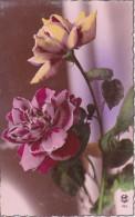 AK Rosen - Ca. 1910 (23393) - Blumen