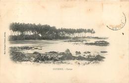 CAYENNE CHATON EDITION EVRARD - Cayenne