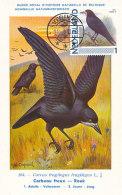 D23389 CARTE MAXIMUM CARD 2011 NETHERLANDS - CORBEAU CORVUS CP MUSEUM ORIGINAL - Vogels