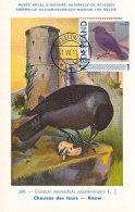 D23392 CARTE MAXIMUM CARD 2011 NETHERLANDS - CHOUCAS JACKDAW CP MUSEUM ORIGINAL - Vogels