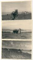 3 PHOTOS  29  PORSPODER CHEVAUX VACHE  13,5x8,5cm - France