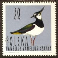 Polen 1964, Poland, Polska, Pologne, Vanellus Vanellus, Bird, Oiseau, SG 1484, YT 1347, Mi 1490 - 1944-.... Republiek