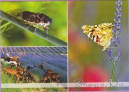 Animaux °° Dans Les Lavandes - Cigale - Papillon Et Chèvres De Provence° NEUVE - Insecten