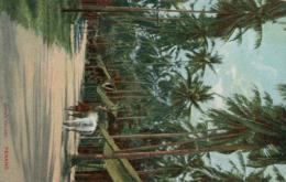 MY PENANG / Native Village / CARTE COULEUR - Malaysia