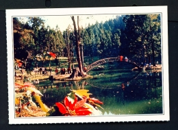 TAIWAN  -  Luku Chitou University Pond  Unused Postcard - Taiwan