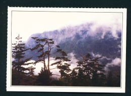 TAIWAN  -  Tayuling  Unused Postcard - Taiwan
