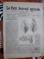 LE PETIT JOURNAL AGRICOLE 15/07/1903 AVEC PUB Les Maladies Du Pommier Du Poirier 16 PAGES - Livres, BD, Revues