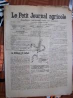LE PETIT JOURNAL AGRICOLE 22/07/1903 AVEC PUB La Rouille Du Saule 16 PAGES - Livres, BD, Revues
