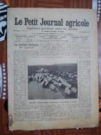 LE PETIT JOURNAL AGRICOLE 2/09/1906 AVEC PUB 16 PAGES MOUTONS BARBARINS - Livres, BD, Revues