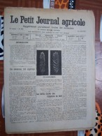LE PETIT JOURNAL AGRICOLE 11/08/1907 AVEC PUB 16 PAGES BLE ALGERIEN - Livres, BD, Revues