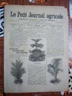 LE PETIT JOURNAL AGRICOLE 22/12/1907 AVEC PUB 16 PAGES ARBORICULTURE FRUITIERE - Livres, BD, Revues