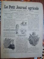 LE PETIT JOURNAL AGRICOLE 13/10/1907 AVEC PUB 16 PAGES LE JARDIN EN OCTOBRE - Livres, BD, Revues