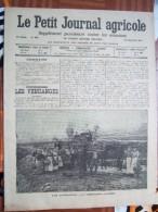 LE PETIT JOURNAL AGRICOLE 28/09/1913 AVEC PUB 16 PAGES LES VENDANGES - Livres, BD, Revues