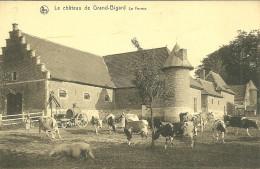 GROOT BIJGAARDEN  GRAND BIGARD CHATEAU FERME ANIMAUX VACHES COCHON BELGIQUE - Dilbeek