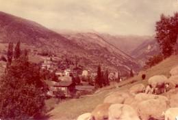 VALLS D'ANDORRA - ANDORRE - Troupeau De Moutons Au Premier Plan - Andorra
