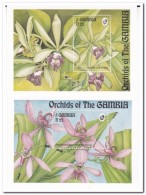 Gambia 1994, Postfris MNH, Flowers, Orchids ( 2nd Block Has A Little Spot ) - Gambia (1965-...)
