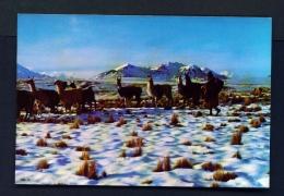 BOLIVIA  -  La Paz  Altiplano Nevado  Unused Postcard - Bolivia