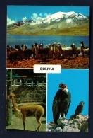 BOLIVIA  -  Wildlife  Multi View  Unused Postcard - Bolivia