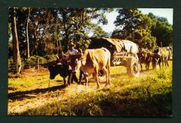 BOLIVIA  -  Santa Cruz De La Sierra  Typical Carts  Unused Postcard - Bolivia