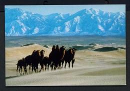 MONGOLIA  -  Bactrian Camels  Unused Postcard - Mongolia