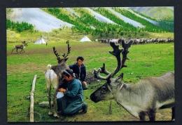 MONGOLIA  -  Tsaatan  Milking Reindeer  Unused Postcard - Mongolia