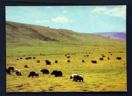 MONGOLIA  -  Grazing On The Steppe  Unused Postcard - Mongolia