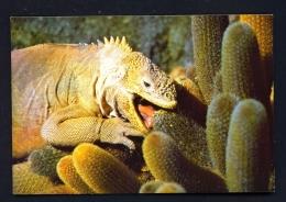 ECUADOR  -  Galapagos  Isla Fernandina  Iguana  Unused Postcard - Ecuador