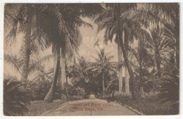 Coconut And Royal Palms, Palm Beach, Fla. - 1918 - Palm Beach