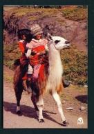 ECUADOR  -  Three Children Riding A Llama  Unused Postcard - Ecuador