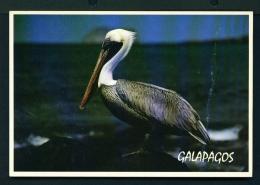 ECUADOR  -  Galapagos  Mosquera Island  Brown Pelican  Unused Postcard (light Crease To Right Side) - Ecuador