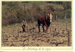 Le Débuttage De La Vigne - Spannen