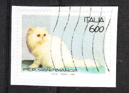 Italia   -   1993. Gatto Persiano Bianco. White Persian Cat. - Big Cats (cats Of Prey)