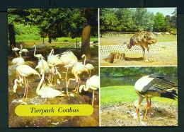 GERMANY  -  Cottbus  Tierpark  Multi View  Unused Postcard - Cottbus