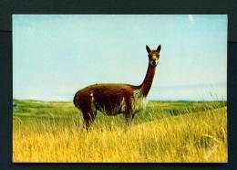 PERU  -  Vicuna In The Puna  Unused Postcard - Peru