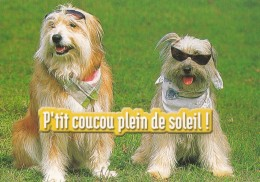 CHIENS - Carte Humour - Hunde